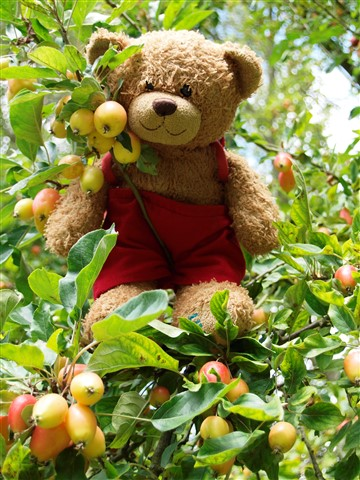 02 When he saw some apples in the apple tree...