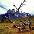 After the great fire in Torres del Paine