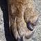 One Paw