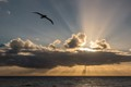 A Wandering Albatross at sunset off the coast of Chile