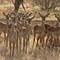 Horn of Africa-2-1