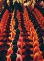 Abundant Buddhas