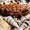 Crab Shell 1