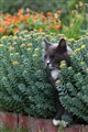 Cat between bushes