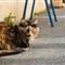 Day 92 - Provençal cat