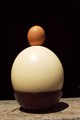 egg and a eggshell