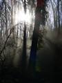 P1050502 Sunlit dust