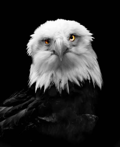 JohbS_Eagle copy