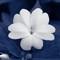 overlay flowers 13 (1)