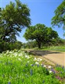 Springtime Drive In The Hill Country