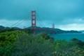 Golden Gate Bridge and Foliage at Golden Gate Park