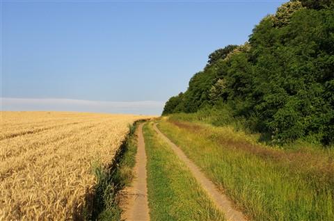 По селския път