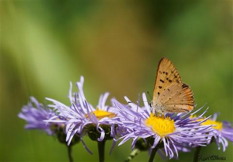 butterfly-00713