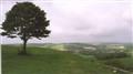Lone tree!
