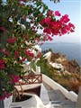 Bougainvillea on Santorini