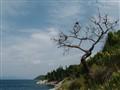 """""""Dead Tree"""""""