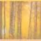 _A110075_soft_frame: OLYMPUS DIGITAL CAMERA
