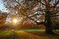 Autumn in my public garden