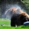 Bear Shower 2010 2563_1