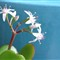 2013-01-27-Blooming Succulent