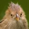 Cute Bird EYES challenge _1080450 2