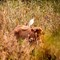 1410 camouflaged cow and bird-1001608 resize