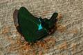 BUTTERFLY-20111024-6362