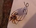Paper spider