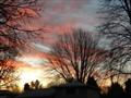 backyard-2011 037