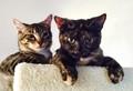 Callie and Figaro