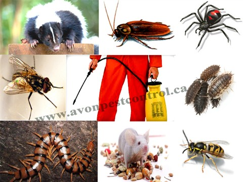 pest-control serivices