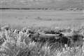 croc idyll