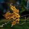 Pentax Fall Colors-6364