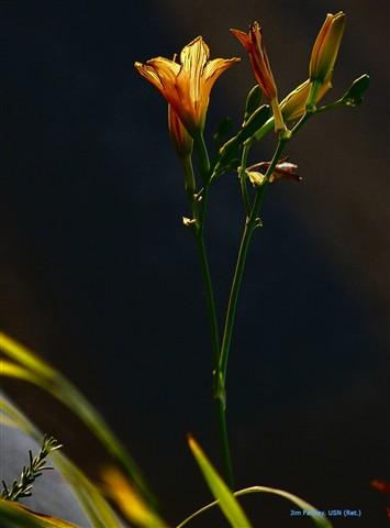 flower jtp