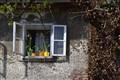 Rustik window
