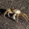 Sand crab night shot