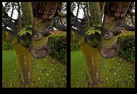 20120611@0728-3D-DEAR-TREE-ANZAC-AVE-4020-768px