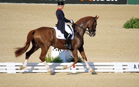 Chesnut Horse in Dressage Competition