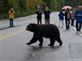 Why did the Bear cross the Street?