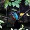 kingfisher Nov13