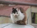 Gato porteño