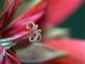The Three Flower