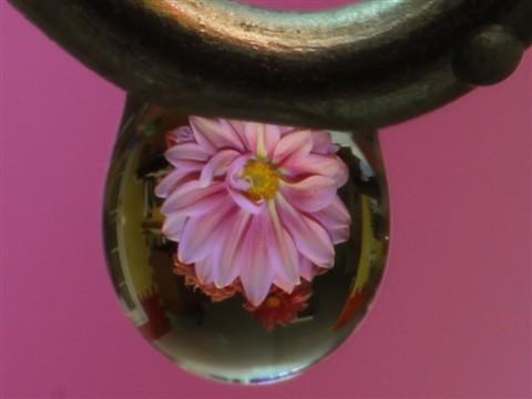 RLM_Flower_in_droplet