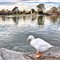 quack 2