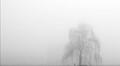 Salice w/ fog