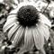 Spikey Flower