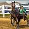 Horse_Show11