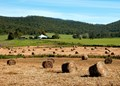Pasture - Past and Present