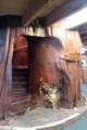 Kauri tree staircase