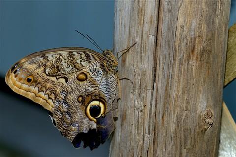 Butterfly_05